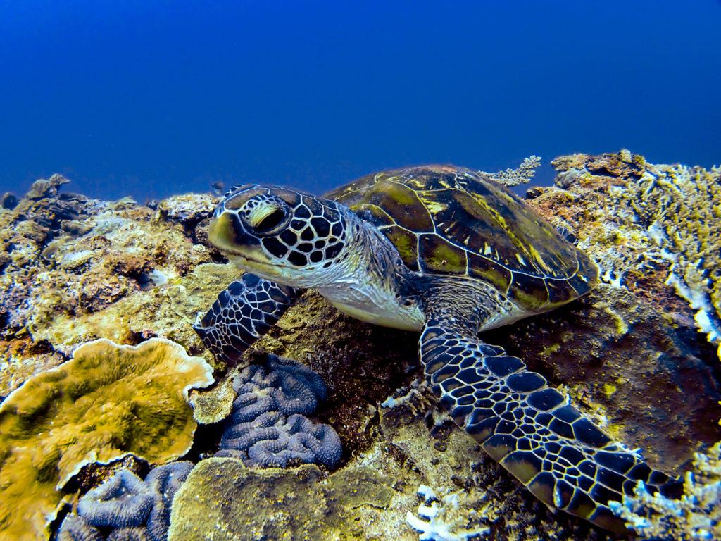沖縄 青の洞窟でウミガメに会いにダイビング