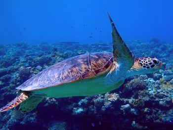 北部の秘境 水納島のウミガメ