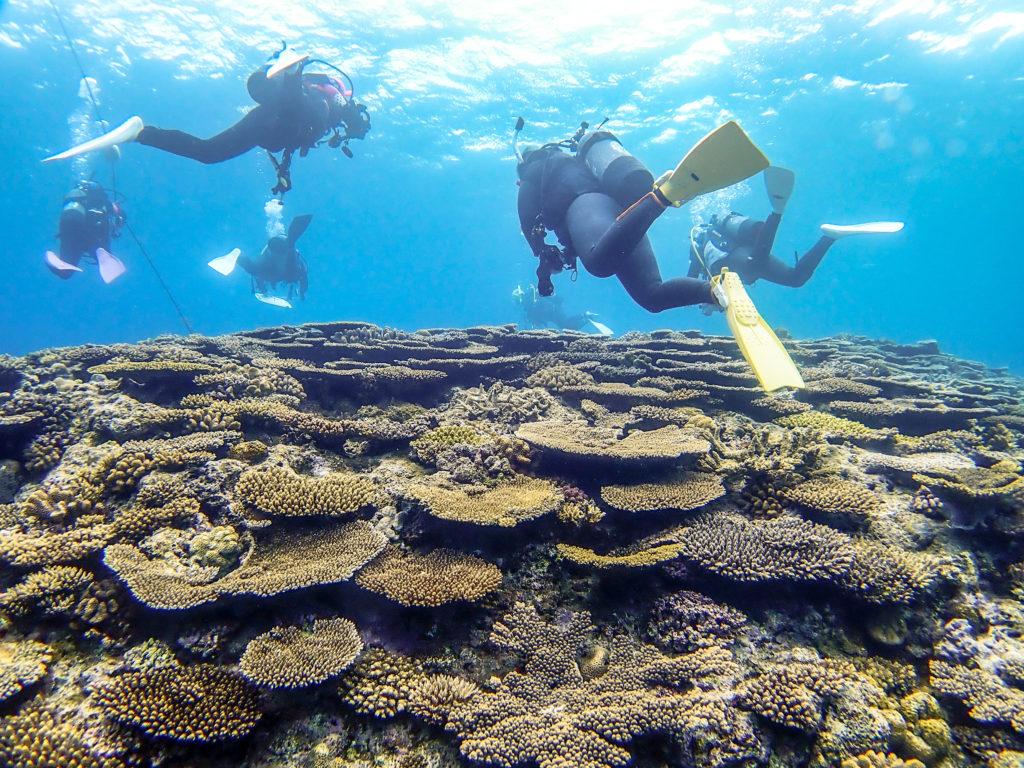 サンゴの村 恩納村