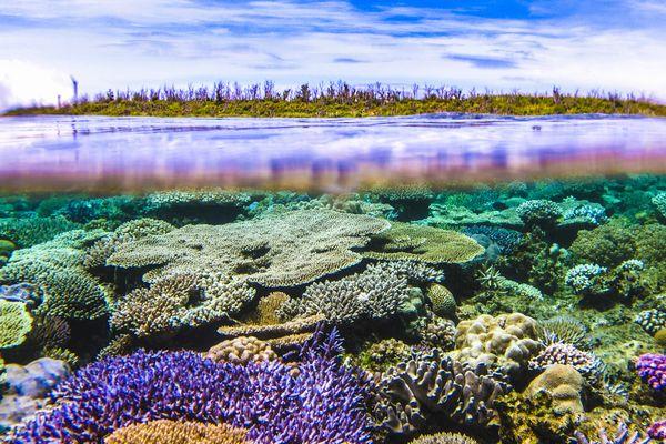 半水面 水納島と珊瑚礁