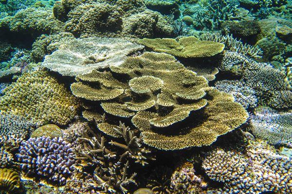 水納島 世界屈指の珊瑚礁の群生