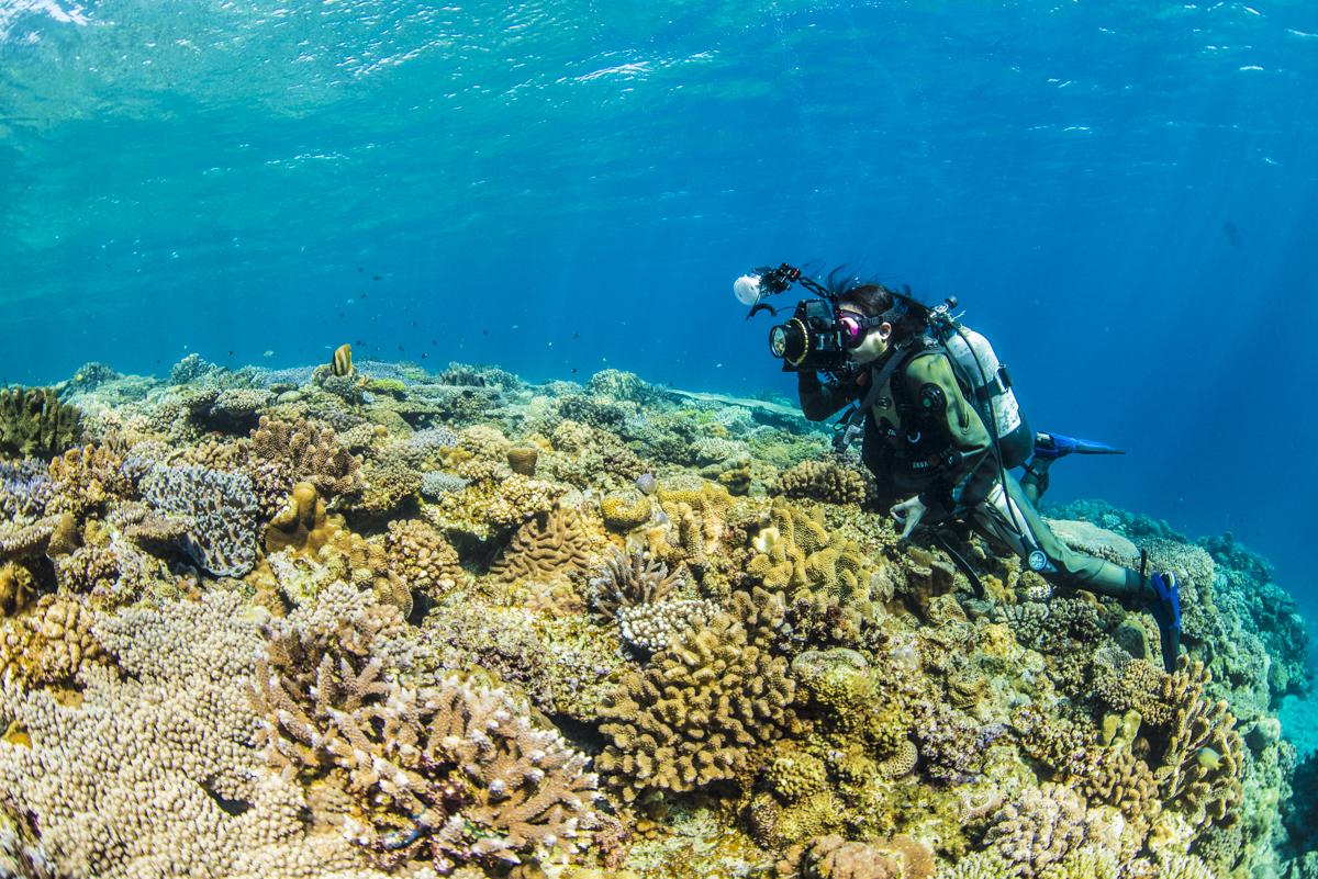水納島の浅瀬の珊瑚礁とダイバー
