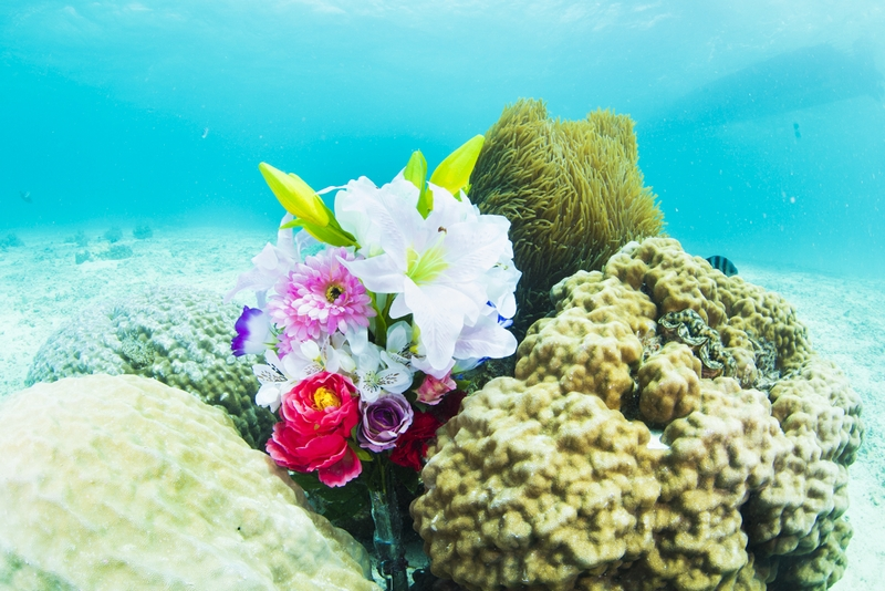 水中プロポーズ・造花と珊瑚とイソギンチャク