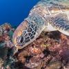 水中写真撮影 空 良太郎 沖縄の珊瑚礁と魚達